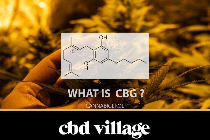 What Is CBG (Cannabigerol)?
