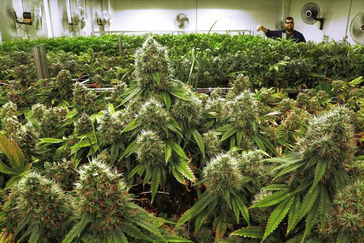 Why Members of the Right Should Embrace Marijuana Legalization