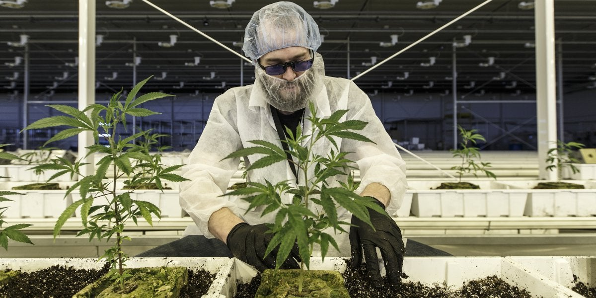 Legal marijuana: This major Canadian cannabis company is finally getting a foothold in the U.S.