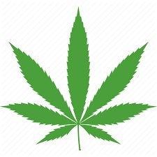Exploring Pro Cannabis Vice President Candidates for Joe Biden