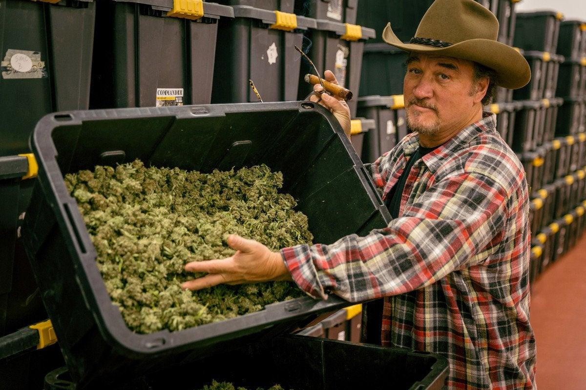 'Growing Belushi' goes inside Jim Belushi's cannabis empire