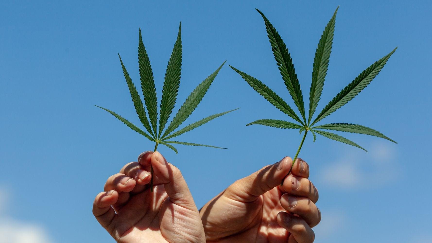 Democrats Reject Marijuana Legalization In Party Platform