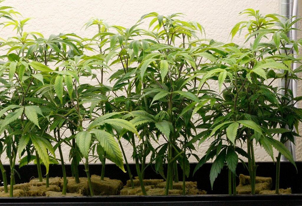 Monterey revisiting legalizing cannabis dispensaries