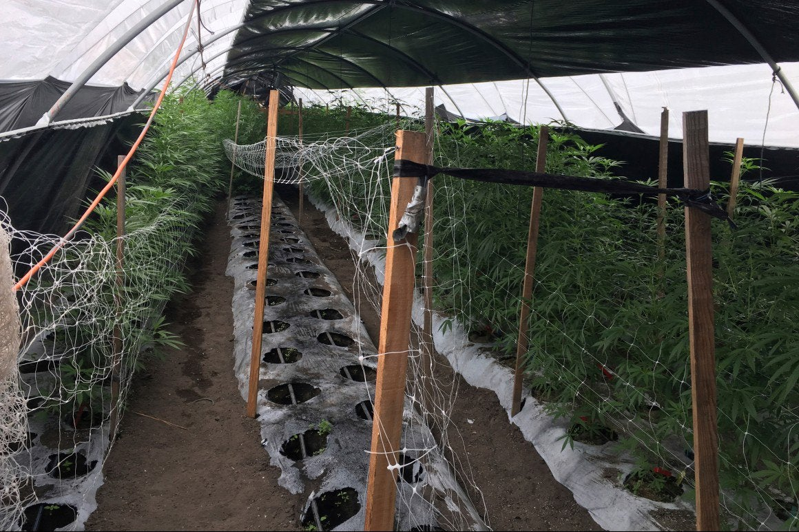 The pandemic is eating away at the illicit marijuana market - Legal sales have boomed since March, though it's hard to say how many customers previously bought from illegal dealers.