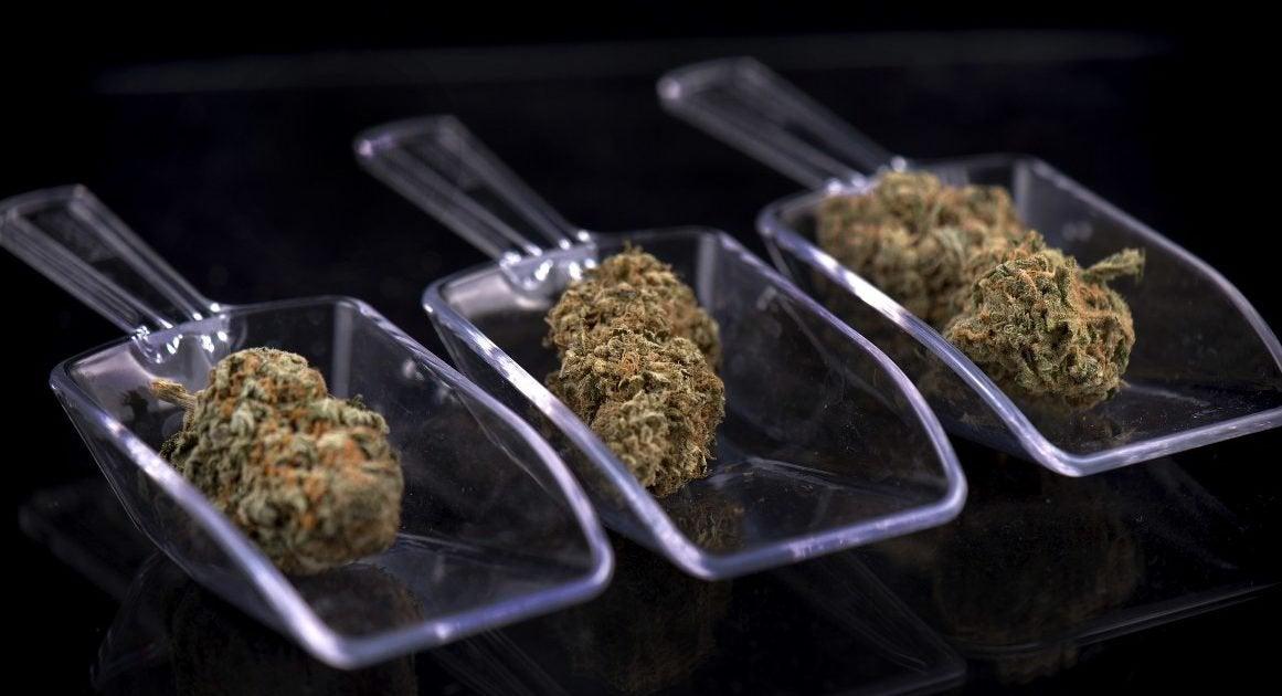 Here's Where Marijuana Is on the Ballot in November
