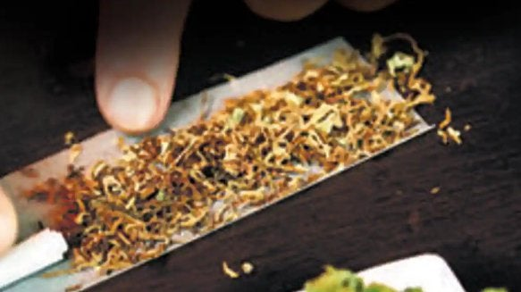 NCB arrests IRS official's son in Lucknow for sourcing curated marijuana from US