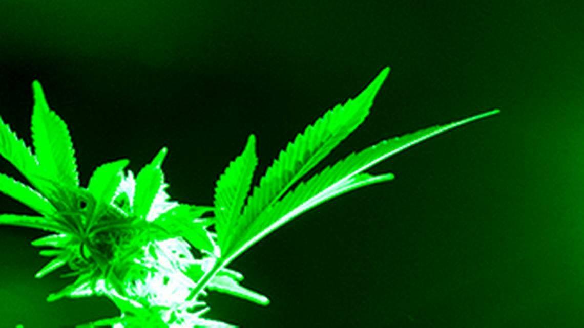 Report says agency obstructed examination of Missouri medical marijuana program